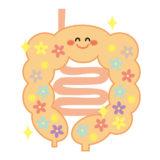 腸内環境を改善して痩せやすい身体になる【ダイエットの近道】
